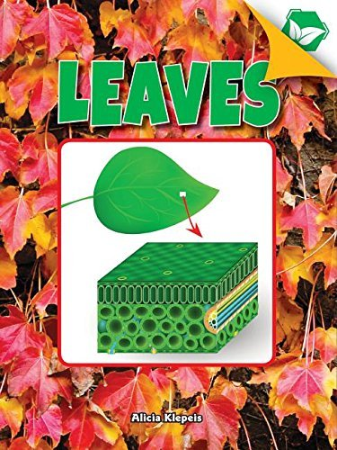 Leaves (A Closer Look at Plants) (English Edition)