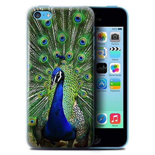 Coque de Stuff4 / Coque pour Apple iPhone 5C / Panda Design / Animaux Sauvages Collection Paon