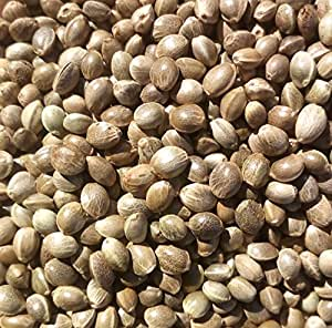 Raw Whole Hemp Seeds 1kg (Cannabis Sativa) Superfine and Premium Export Quality