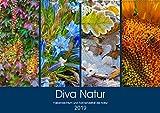 Diva Natur (Wandkalender 2019 DIN A2 quer): Farbenreichtum und Formenvielfalt in der Natur (Monatskalender, 14 Seiten ) (CALVENDO Natur)