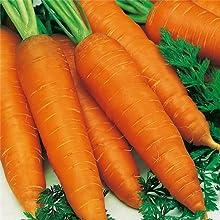 Nuevos 400 semillas de zanahoria jardín sano vehículo envío libre para no GMO