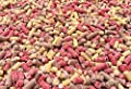 5kg Premium High Energy Mixed Mealworm Berry & Insect Suet Pellets - Wild Bird Food Treat from Pet Performance