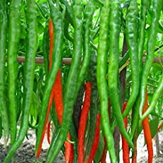 Creative Farmer Hybrid Green Chilli Seeds (Pack of 100 Seeds)