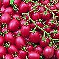 Cherrytomate - Tomate - Pink Grape - sehr ertragreich - süß - 20 Samen von Xuanqin bei Du und dein Garten