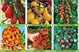 Heirloom Tomatoes Seeds And Plants To And Grows Review and Comparison