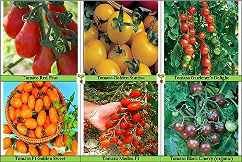Viridis Hortus - Cherry/Plum Tomato Collection Contains 6 Varieties - Red Pear, Golden Sunrise, Gardener's Delight, Golden Sweet F1, Modus F1 & Black