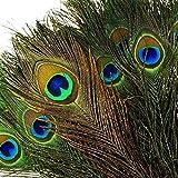 onewiller 100plumes de paon naturel avec Eye (25,4cm 30,4cm) de haute qualité queue de paon Plumes