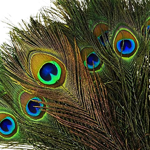 onewiller 100Stück natürliche Pfauenfedern mit Eye (25,4cm–12