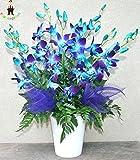 100pcs / bag Blau Orhid Samen Phalaenopsis-Orchideen-Bonsai Blumensamen Orhid Topf Balkon Anlage für Hausgarten-freies Verschiffen