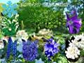 Big Set Immerblühender Winterharter Farbgarten Stauden Set 6 verschiedene Stauden in Blau Weiß von Lifestyle-Hamburg Pflanzenraritäten - Du und dein Garten