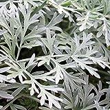 Vivai Le Georgiche Assenzio (Artemisia Absinthium)