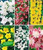 BALDUR-Garten 5 Meter Blüh-Hecken-Kollektion