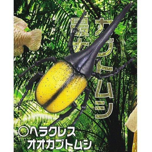 Tridimensionale capsula enciclopedia massimo Amazon Hen biologica [4. Scarabeo Ercole]