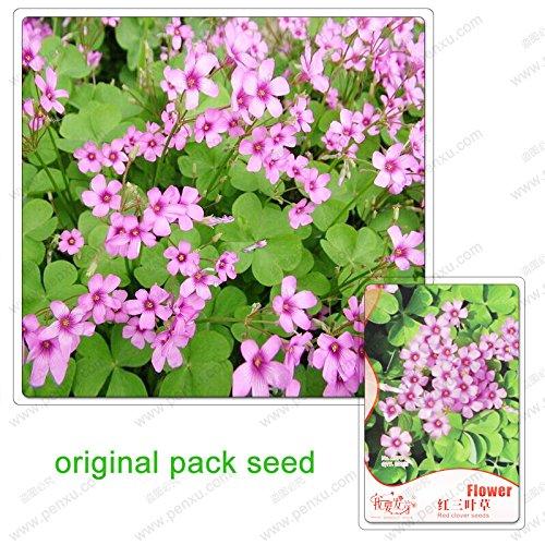 200 semi/pacchetto, semi di trifoglio, trifoglio semi foraggio bonsai, cortile interno ufficio terrazza del desktop Fiori in vaso