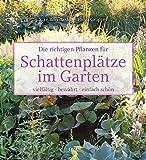 Die richtigen Pflanzen für Schattenplätze im Garten: vielfältig, bewährt, einfach schön