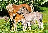 Unbekannt Puzzle 120 Teile - Tierkinder Pferde - Pony Pferd mit Fohlen Tierkind - Kinderpuzzle für Kinder Tiere Tier auf der Wiese