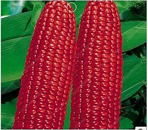 20pcs / sac noir rouge jaune corns graines de légumes graines de fruits jardin de bonsaïs semences potagères pour plantes à la maison multicolor