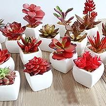 Calcifer® 3Sets Mini Künstliche Sukkulenten mit Vase für Home Garden Party Hochzeit Decor rot