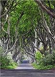 Poster 70 x 100 cm: Zauberwald in Irland von Dieter Meyrl -