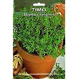 Vivai Le Georgiche Timo - THYMUS VULGARIS (Semente)