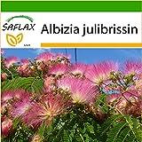 SAFLAX - Schlafbaum - 50 Samen - Mit Substrat - Albizia julibrissin