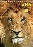 Wildlife 2019 (Tischkalender 2019 DIN A5 hoch): Wildlife-Fotografie (Monatskalender, 14 Seiten ) (CALVENDO Tiere)