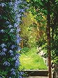 Artland Qualitätsbilder I Wandbilder selbstklebende Wandfolie 90 x 120 cm Landschaften Garten Foto Grün C8UZ Ein Garteneingang umgeben von lavendelfarbiger Clematis