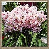 semi 100PCS Cymbidium, Cymbidium orchidea, fiori in vaso, ha un significato della longevità, per la casa e la decorazione del giardino A15