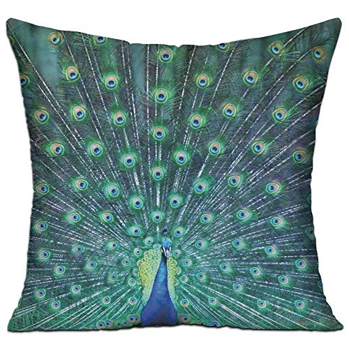 Not Covers Sofa 18 Are Included Feather Inserts Square Case Car Jolly2t Bedroom Cushion For Pillow Peacock uJ3Fcl1TK