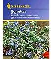 Borretsch, Gurkenkraut, 1 Tüte Samen von Kiepenkerl - Du und dein Garten