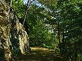 Artland Qualitätsbilder I Wandbilder Selbstklebende Wandfolie 120 x 90 cm Landschaften Wald Foto Grün D1LM Waldweg am Felsen