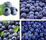 2016 200 graines / sac, Blueberry Bush Seeds, Vaccinium Corymbosum facile de planter les graines de la porte Livraison gratuite Mix Colors