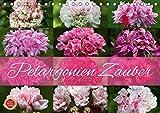 Pelargonien Zauber (Tischkalender 2019 DIN A5 quer): Erleben Sie den Zauber von wunderbaren Pelargonien, im Volksmund auch unter Geranien bekannt. (Monatskalender, 14 Seiten ) (CALVENDO Natur)