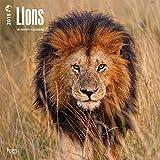 Lions - Löwen 2018-18-Monatskalender: Original BrownTrout-Kalender [Mehrsprachig] [Kalender] (Wall-Kalender)