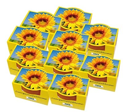 10er Set Minipflanzset Zwergsonnenblume von Bull + Bear auf Du und dein Garten