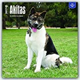 Akitas 2017-18-Monatskalender mit freier DogDays-App: Original BrownTrout-Kalender [Mehrsprachig] [Kalender] (Wall-Kalender)