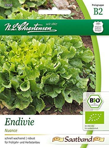 Bio Endivie \'Nuance\' Saatband Saatgut Samen (schnell wachsend, robust)