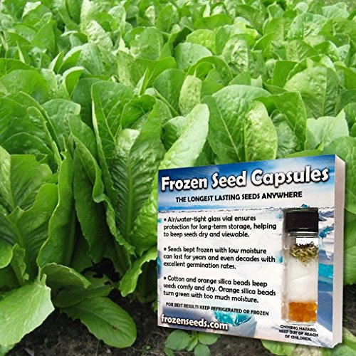 Green Towers Romaine Lettuce Seeds (Lactuca sativa) 30+ Vegetable Seeds + FREE Bonus 6 Variety Seed Pk - a $29.95 Value! Packed in FROZEN SEED CAPSULES for Growing Seeds Now or Saving Seeds for Years (Romaine Seeds Lettuce)