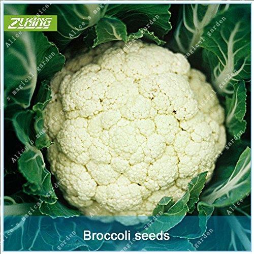 Galleria fotografica ZLKING 100 Pz cinese bianco cavolfiore verdure Bonsai semi freschi natura organica non-OGM sano semi verdura vegetali