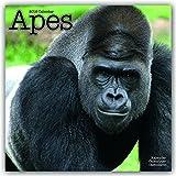 Apes - Affen 2018: Original Avonside-Kalender [Mehrsprachig] [Kalender] (Wall-Kalender) - Avonside Publishing