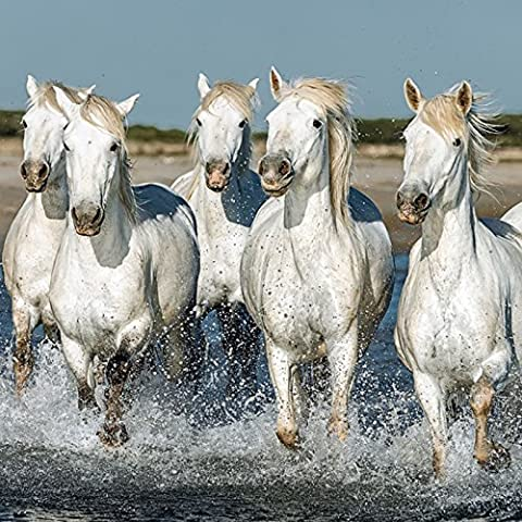 Artland Küchenrück-Wand Spritzschutz Hightech-Aluminium-Verbundplatten Vadim Petrakov Weiße Camargue Pferde galoppieren am Strand entlang, Frankreich Tiere Haustiere Pferd Fotografie Weiß