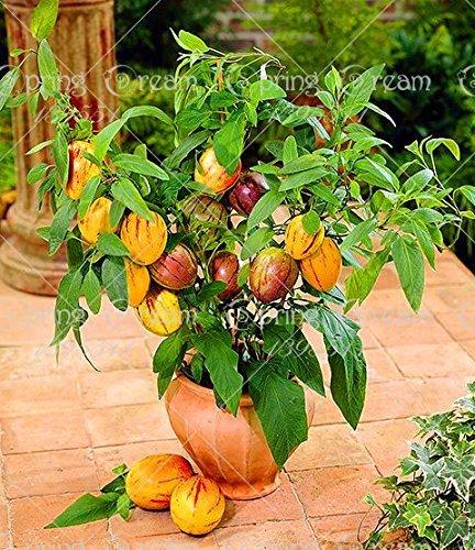 100 pcs/sac Mini Sweet Melon Graines Melon Arbre non Gmo-organic Graines de fruits et de légumes pour DIY Home Garden