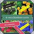 40x Himbeeren Mix Samen Garten Hingucker Pflanze Rarität essbar Himbeere sehr selten von Import - Handel Ipsa bei Du und dein Garten