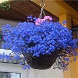 Les graines de fleurs de graines de fleurs verveine bleu- pots de fleurs de fleurs d'ornement bleu jardinières 50 graines donnant sur le balcon Bonsai h36