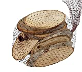 10 Stk Holzscheiben 12cm !! oval Baumscheiben Holz Scheiben Birke Baum Scheibe Basteln Holzstücke Birkenscheiben Holzscheibe
