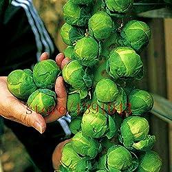 Grosses soldes! 200pcs / mini sac de graines de chou, les choux de Bruxelles semences, Long Island, Heirloom, bio, graines végétales non OGM pour la maison et le jardin