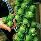 Vendita calda! 200pcs / bag semi mini cavoli, cavoletti di Bruxelles Seed, Long Island, Heirloom, Cibo biologico,-OGM non semi di verdure per casa e giardino