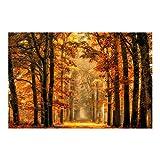 Bilderwelten Fotomural Premium - Bosque Encantado en Otoño - Mural apaisado papel pintado fotomurales murales pared papel para pared foto 3D mural pared barato decorativo, Tamaño: 255cm x 384cm
