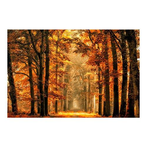 Bilderwelten Fotomural Premium - Bosque Encantado en Otoño - Mural apaisado papel...