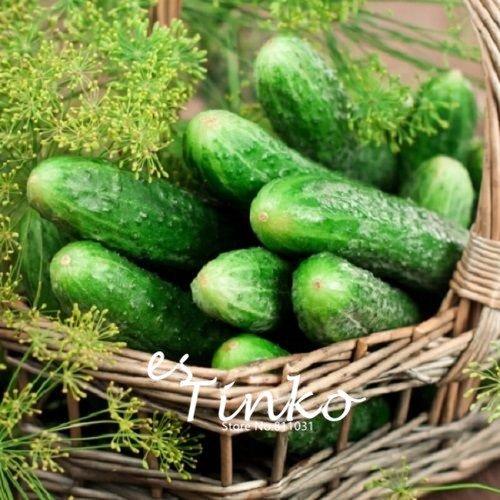 De nouvelles variétés de concombre arrivée Jardinerie plante concombre légumes Graines Cucumis sativus Facile plantation 30 pcs 02